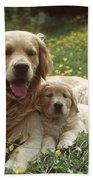 Golden Retrievers Dog And Puppy Beach Towel