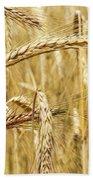 Golden Wheat  Beach Towel