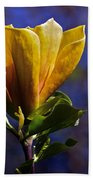 Golden Yellow Magnolia Blossom Beach Towel