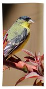 Goldfinch On Branch 031015aa Beach Towel