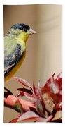 Goldfinch On Branch 031015aab Beach Towel