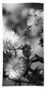 Gone To Seed Wild Aster Beach Towel