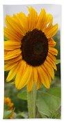 Good Morning Sunshine - Sunflower Beach Towel