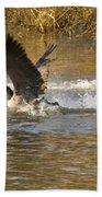 Goose Water Landing Beach Towel
