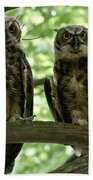 Gorgeous Great Horned Owls Beach Towel