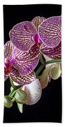 Gorgeous Orchids Beach Towel