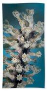 Gorgonian Beach Towel