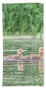Goslings All In A Row Beach Towel