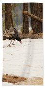 Gould's Wild Turkey Beach Towel