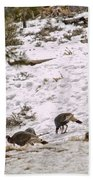 Gould's Wild Turkey Viii Beach Towel