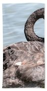 Graceful Black Swan Beach Towel