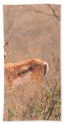 Grant's Gazelle Nanger Granti Beach Towel