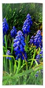 Grape Hyacinths 2014 Beach Towel
