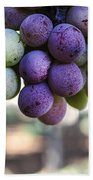 Grapes On Vine Beach Towel