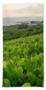 Grapevines And Islet Beach Towel by Gaspar Avila