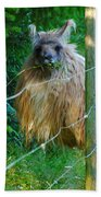 Grass Is Always Greener - Llama Beach Towel by Jordan Blackstone