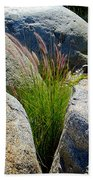 Grasses In Oasis On Borrego Palm Canyon Trail In Anza-borrego Desert Sp-ca Beach Towel