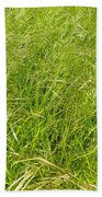 Grasses  Beach Towel