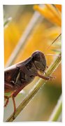 Grasshopper On Coneflower Stem Beach Towel