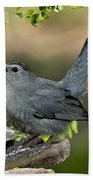 Gray Catbird Drinking Beach Towel