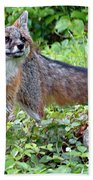 Gray Fox Beach Towel