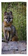 Gray Fox Posing Beach Towel