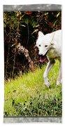 Gray Wolf 2 Beach Towel