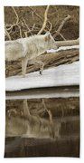 Gray Wolf Reflection Beach Towel