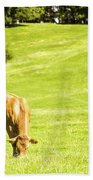 Grazing Cows Beach Towel