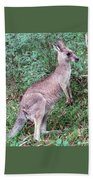 Grazing In The Grass Beach Towel