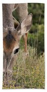 Grazing Oklahoma Beach Towel