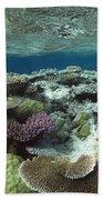 Great Barrier Reef Near Port Douglas Beach Towel