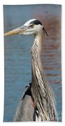 Great Blue Heron By The Water Beach Towel