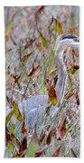 Great Blue Heron In Fall Marsh Beach Towel