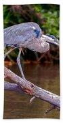 Great Blue Heron Oak Creek Canyon Sedona Arizona Beach Towel