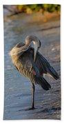 Great Blue Heron Preening On The Beach Beach Towel