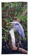 Great Blue Heron Resting Beach Towel