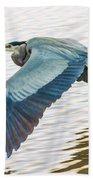 Great Blue Heron Taking Flight Beach Towel