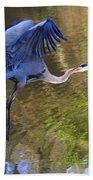 Great Blue Heron Taking Off Beach Towel