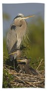 Great Blue Heron With Chicks Florida Beach Towel