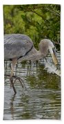 Great Blue Heron With Fish Beach Towel