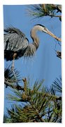 Great Blue Heron With Nest Material Beach Towel