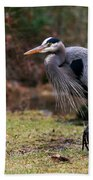 Great Blue On The Clinch River IIi Beach Towel