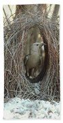 Great Bowerbird Male In Bower Australia Beach Towel
