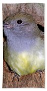 Great Crested Flycatcher In Nest Cavity Beach Towel