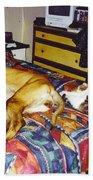 Great Dane And Cat Beach Sheet