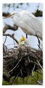 Great Egret Chicks - Sibling Rivalry Beach Towel by Carol Groenen