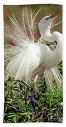 Great Egret Courtship Display Beach Towel