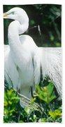 Great Egret Displaying Breeding Plumage Beach Towel