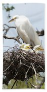Great Egret Nest With Chicks And Mama Beach Towel